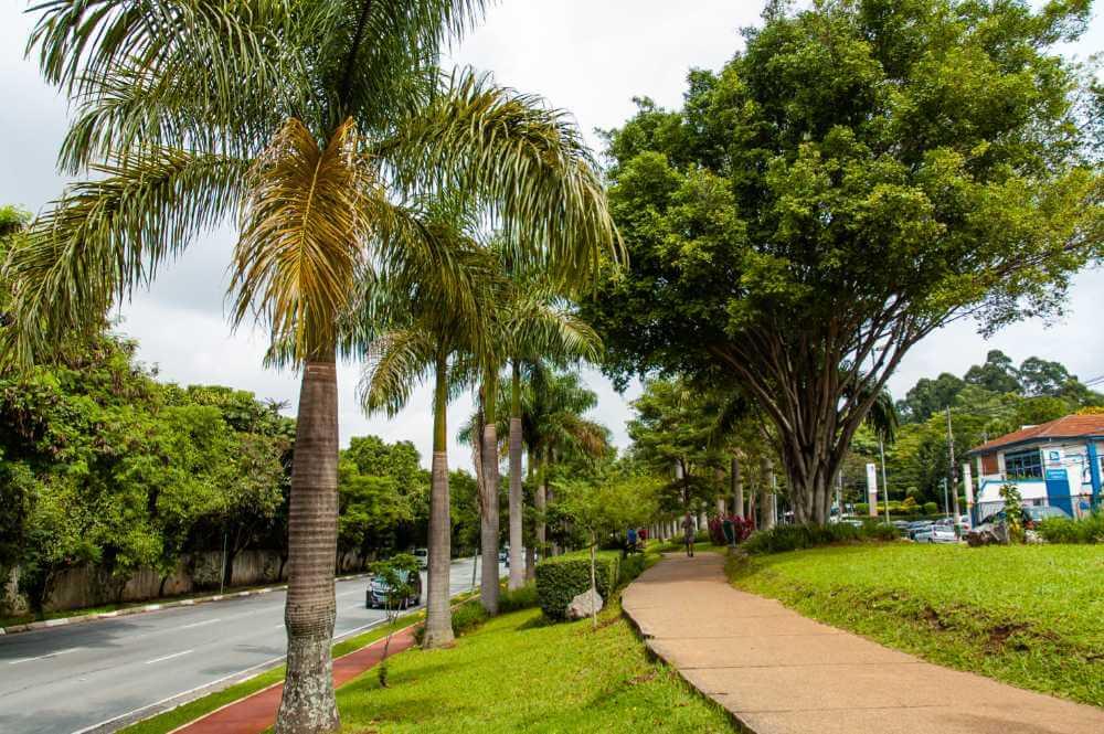 Capa - Aproveite a pista da Avenida Braz Leme para caminhar e pedalar